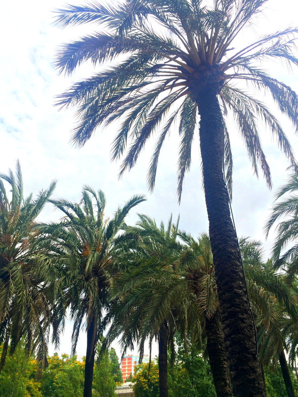 1. Palmtrees lisbon Copyright mandy victoria